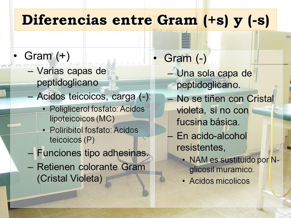 Diferencias entre Gram (+s) y (-s)