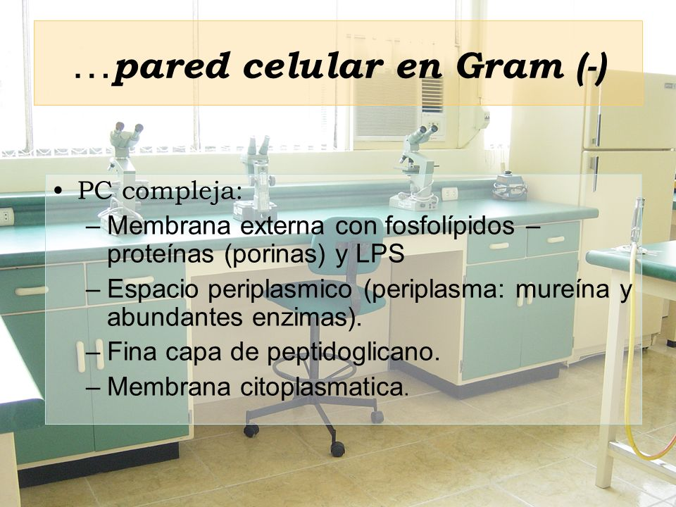 …pared celular en Gram (-)