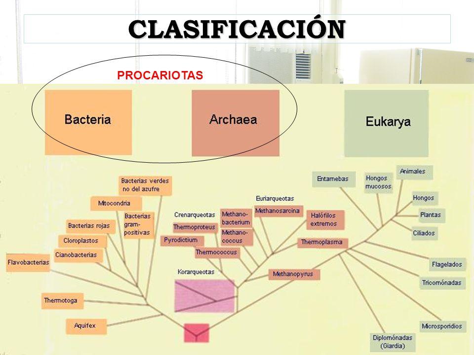 CLASIFICACIÓN PROCARIOTAS