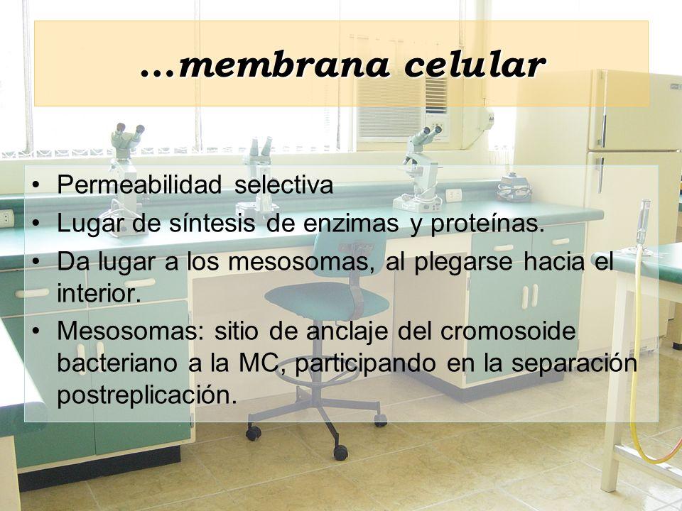 …membrana celular Permeabilidad selectiva