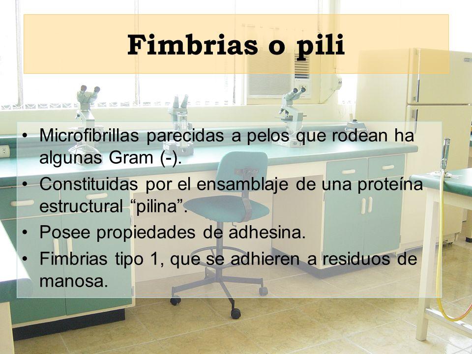 Fimbrias o pili Microfibrillas parecidas a pelos que rodean ha algunas Gram (-).