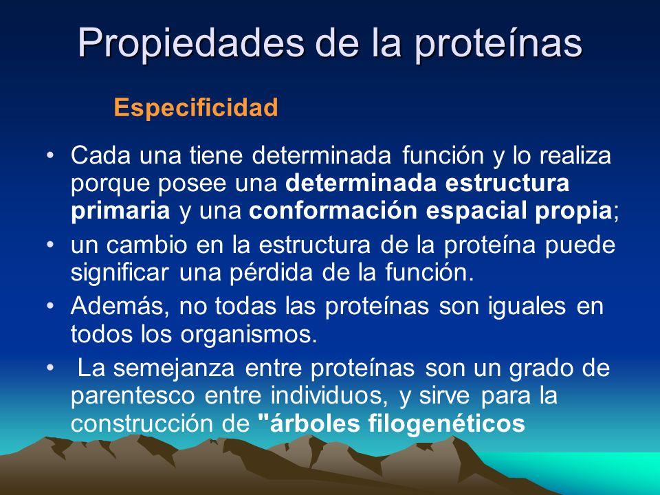 Propiedades de la proteínas