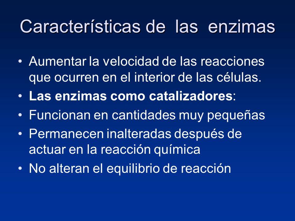 Características de las enzimas