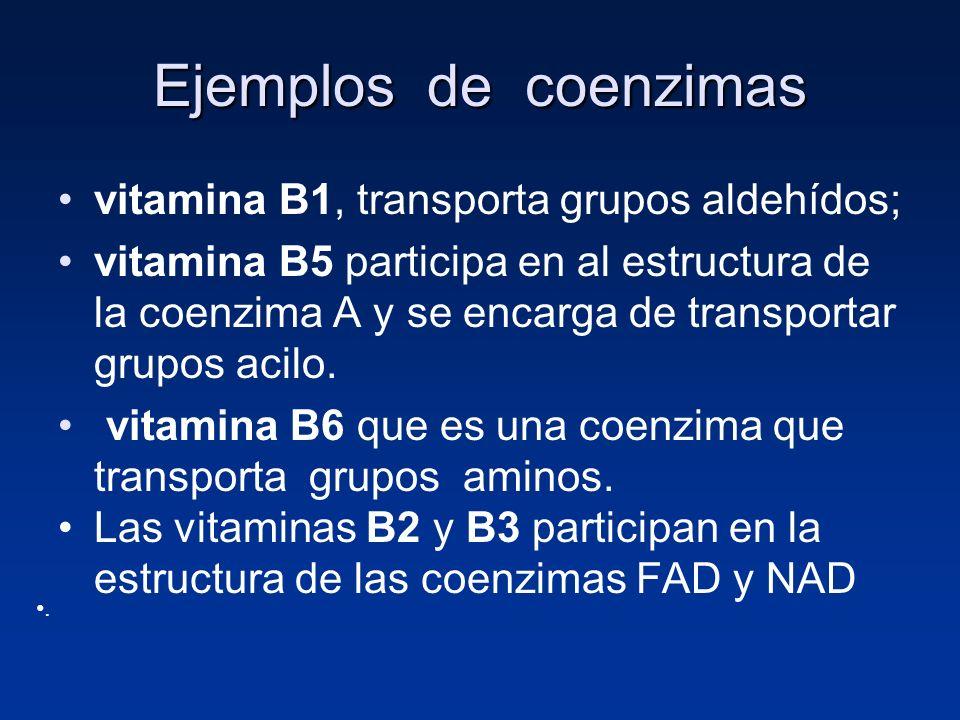 Ejemplos de coenzimas vitamina B1, transporta grupos aldehídos;