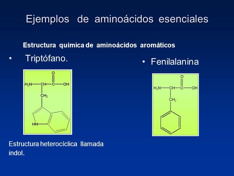 Ejemplos de aminoácidos esenciales
