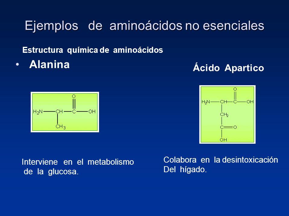 Ejemplos de aminoácidos no esenciales