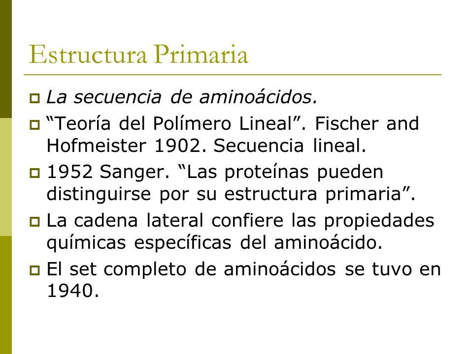 Estructura Primaria La secuencia de aminoácidos.