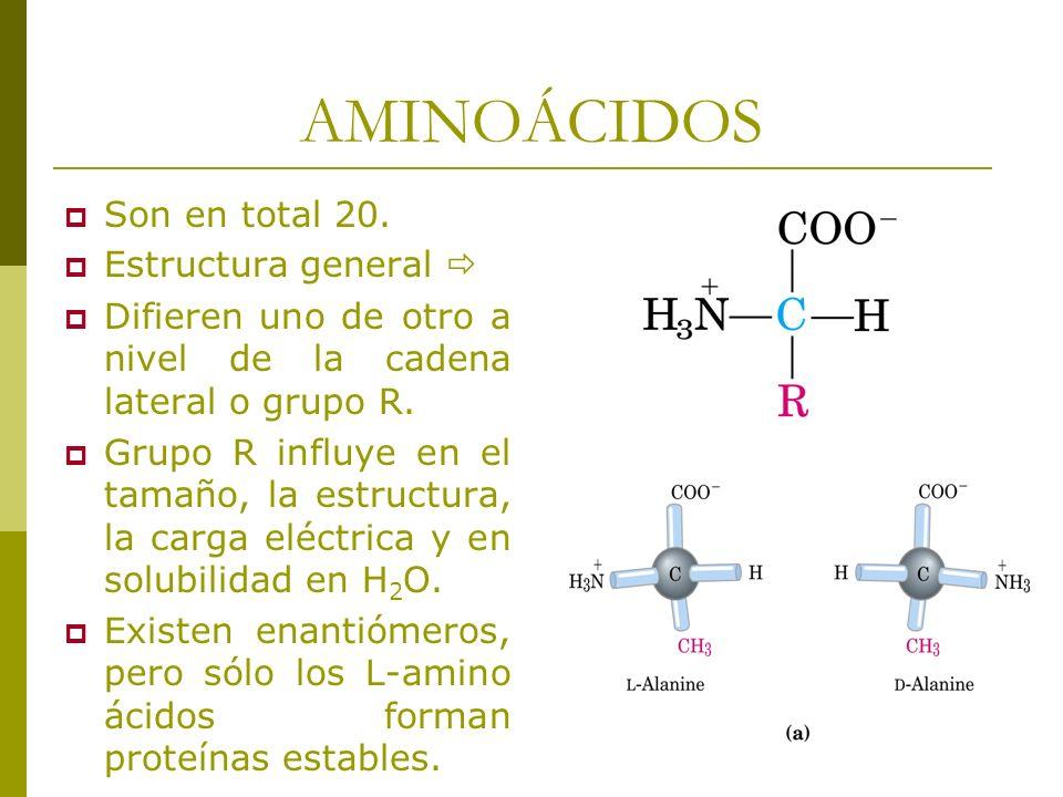 AMINOÁCIDOS Son en total 20. Estructura general 