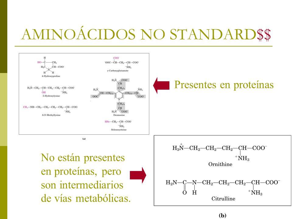 AMINOÁCIDOS NO STANDARD$$