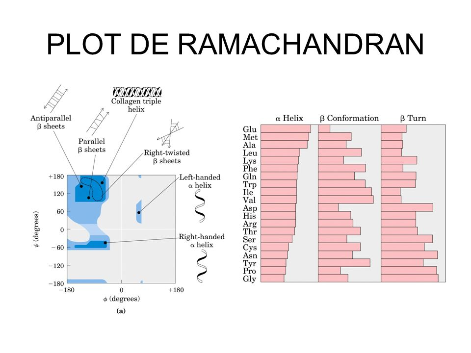 PLOT DE RAMACHANDRAN