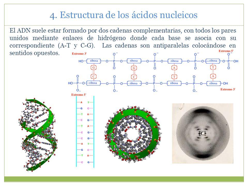 4. Estructura de los ácidos nucleicos
