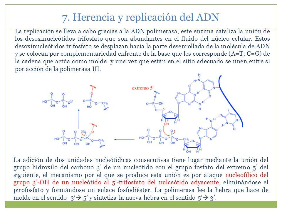 7. Herencia y replicación del ADN