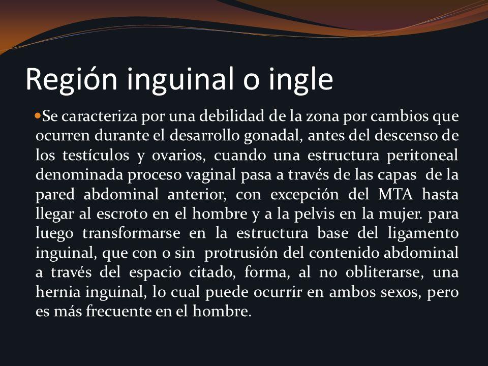 Región inguinal o ingle