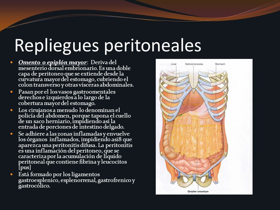 Repliegues peritoneales