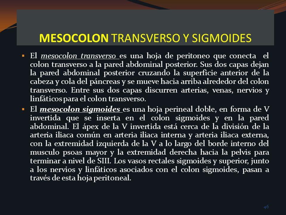 MESOCOLON TRANSVERSO Y SIGMOIDES