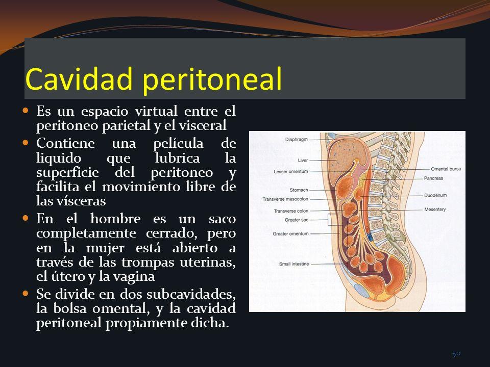 Cavidad peritoneal Es un espacio virtual entre el peritoneo parietal y el visceral.
