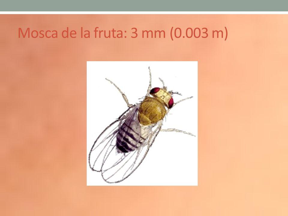Mosca de la fruta: 3 mm (0.003 m)