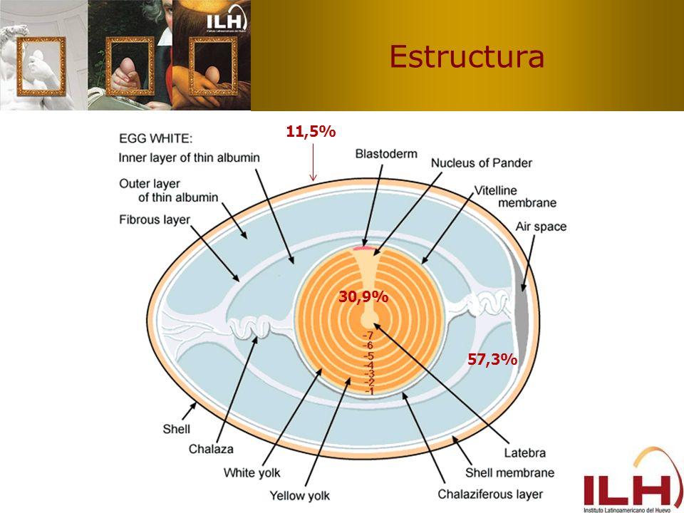 Estructura 11,5% 30,9% 57,3%