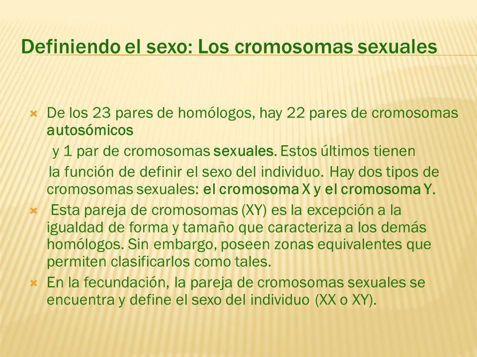 Definiendo el sexo: Los cromosomas sexuales