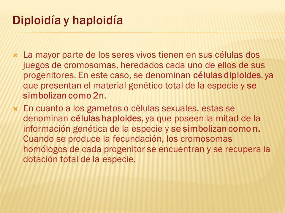 Diploidía y haploidía