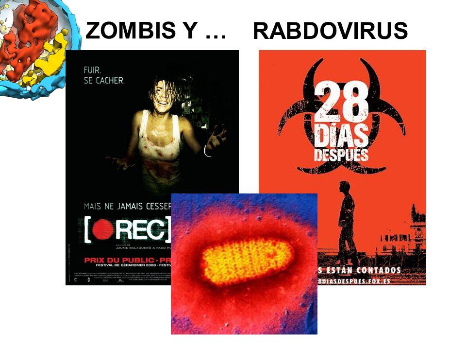 ZOMBIS Y … RABDOVIRUS