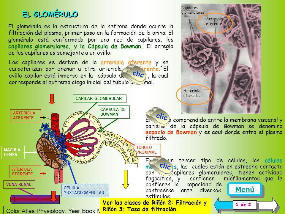 EL GLOMÉRULO . clic clic clic clic Menú