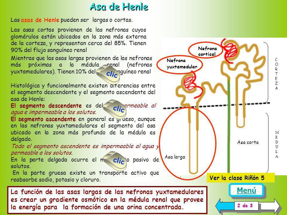 Asa de Henle clic clic clic Menú