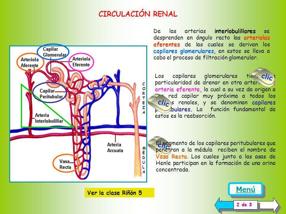 CIRCULACIÓN RENAL clic clic clic Menú