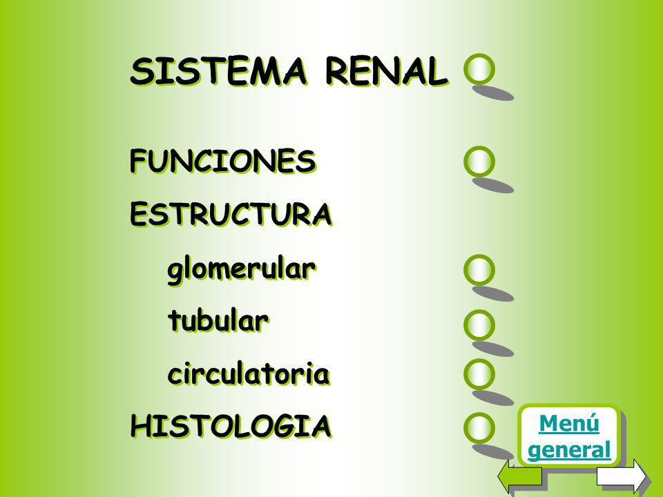 SISTEMA RENAL FUNCIONES ESTRUCTURA glomerular tubular circulatoria