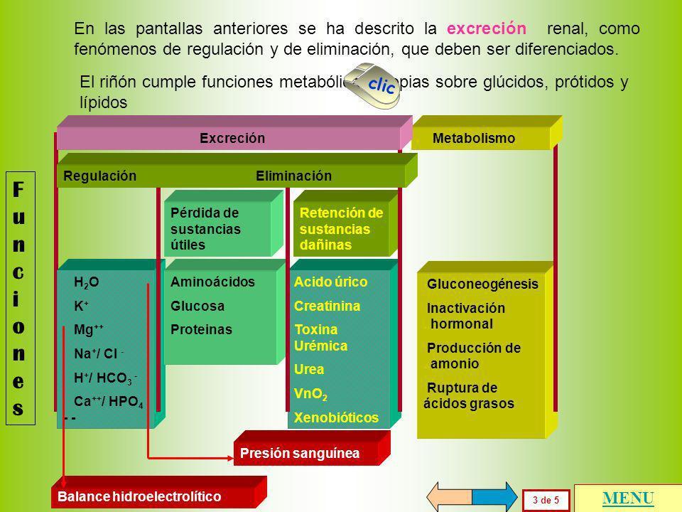 En las pantallas anteriores se ha descrito la excreción renal, como fenómenos de regulación y de eliminación, que deben ser diferenciados.