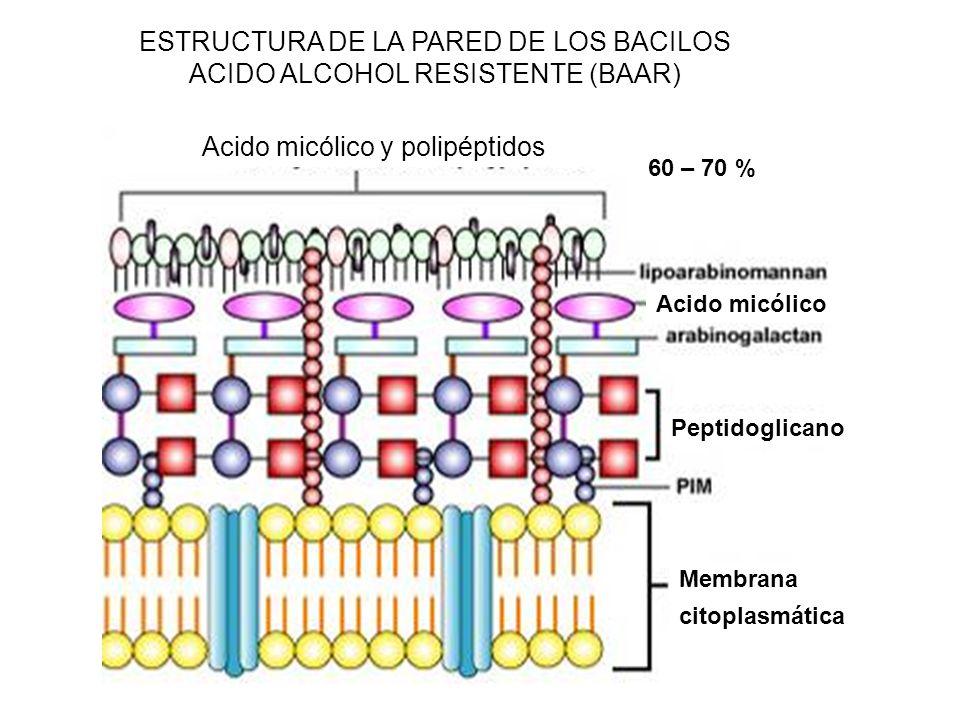 ESTRUCTURA DE LA PARED DE LOS BACILOS ACIDO ALCOHOL RESISTENTE (BAAR)