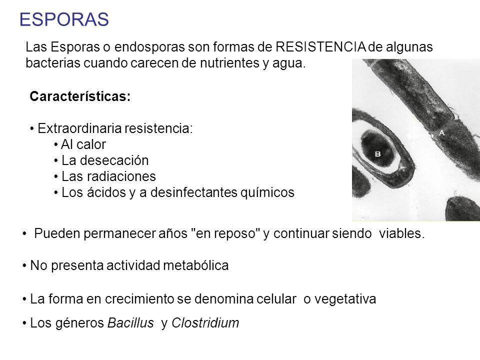 ESPORAS Las Esporas o endosporas son formas de RESISTENCIA de algunas bacterias cuando carecen de nutrientes y agua.