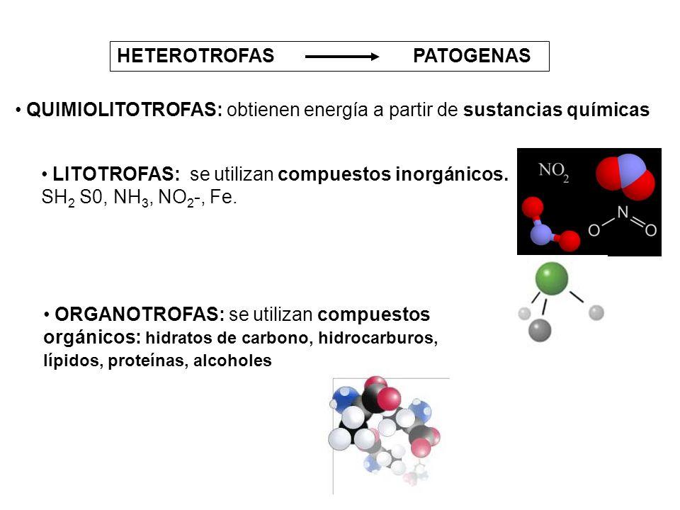 HETEROTROFAS PATOGENAS