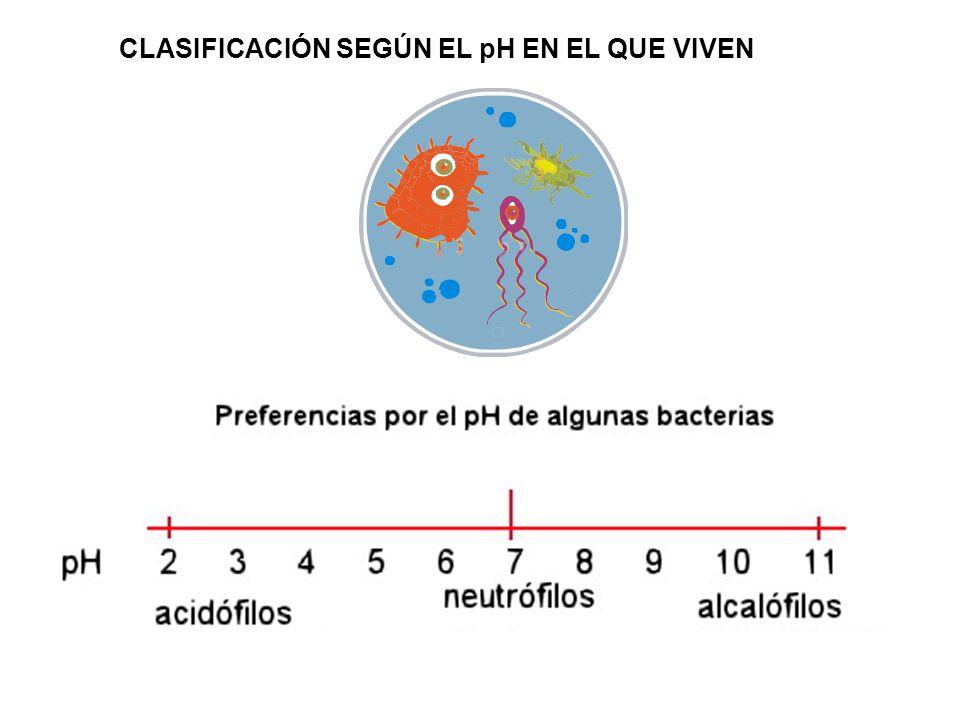 CLASIFICACIÓN SEGÚN EL pH EN EL QUE VIVEN