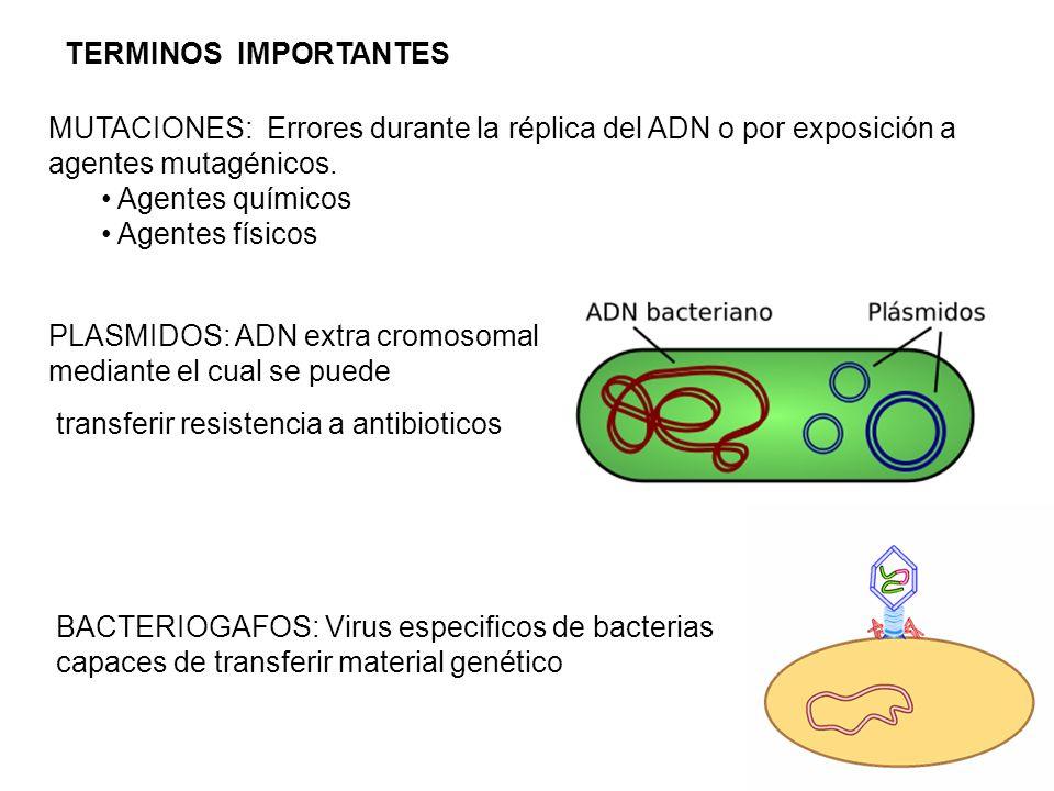 TERMINOS IMPORTANTESMUTACIONES: Errores durante la réplica del ADN o por exposición a agentes mutagénicos.
