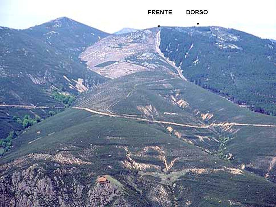 FRENTE DORSO