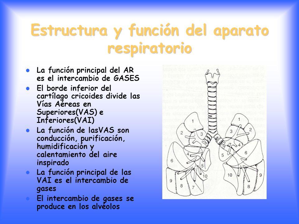 Estructura y función del aparato respiratorio