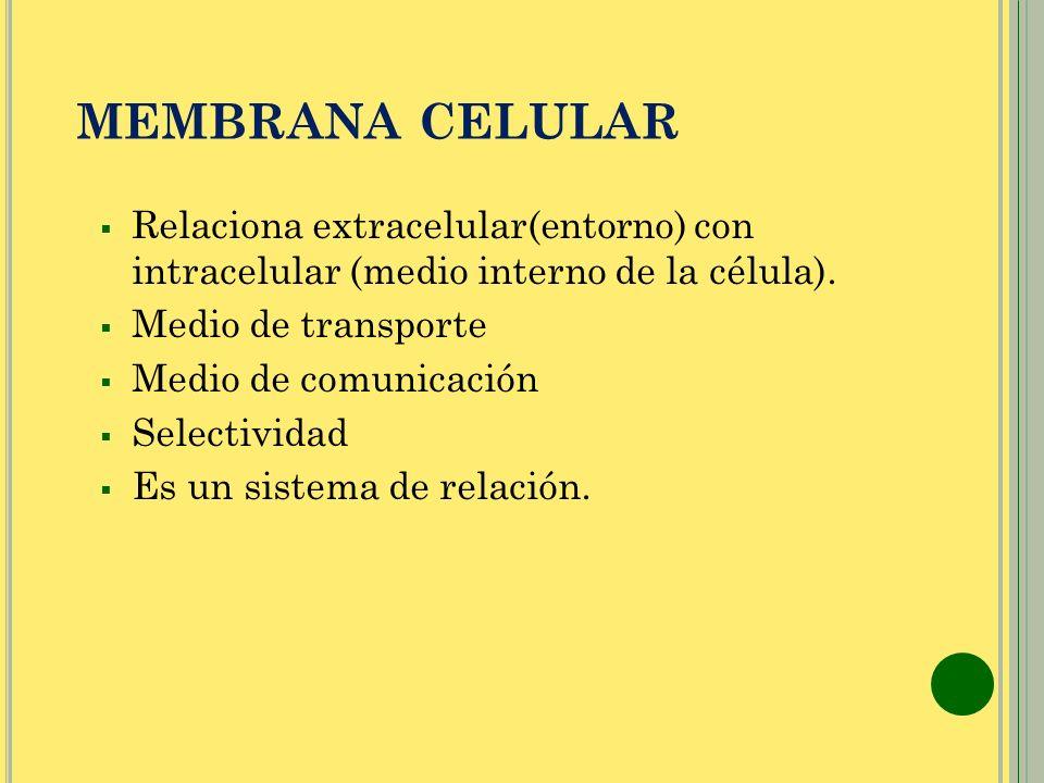 MEMBRANA CELULAR Relaciona extracelular(entorno) con intracelular (medio interno de la célula). Medio de transporte.