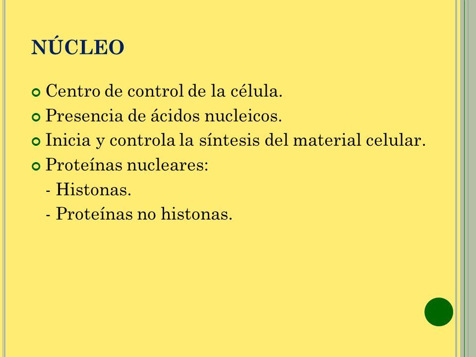 NÚCLEO Centro de control de la célula. Presencia de ácidos nucleicos.