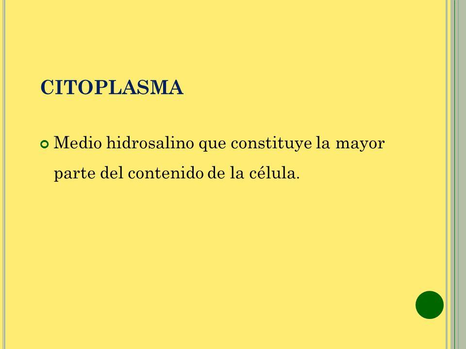 CITOPLASMA Medio hidrosalino que constituye la mayor parte del contenido de la célula.