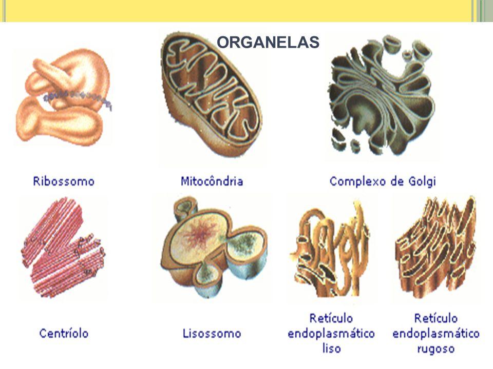 ORGANELAS