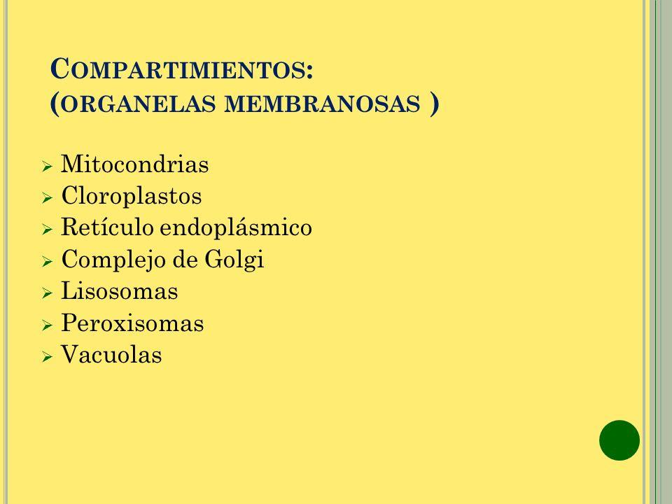 Compartimientos: (organelas membranosas )
