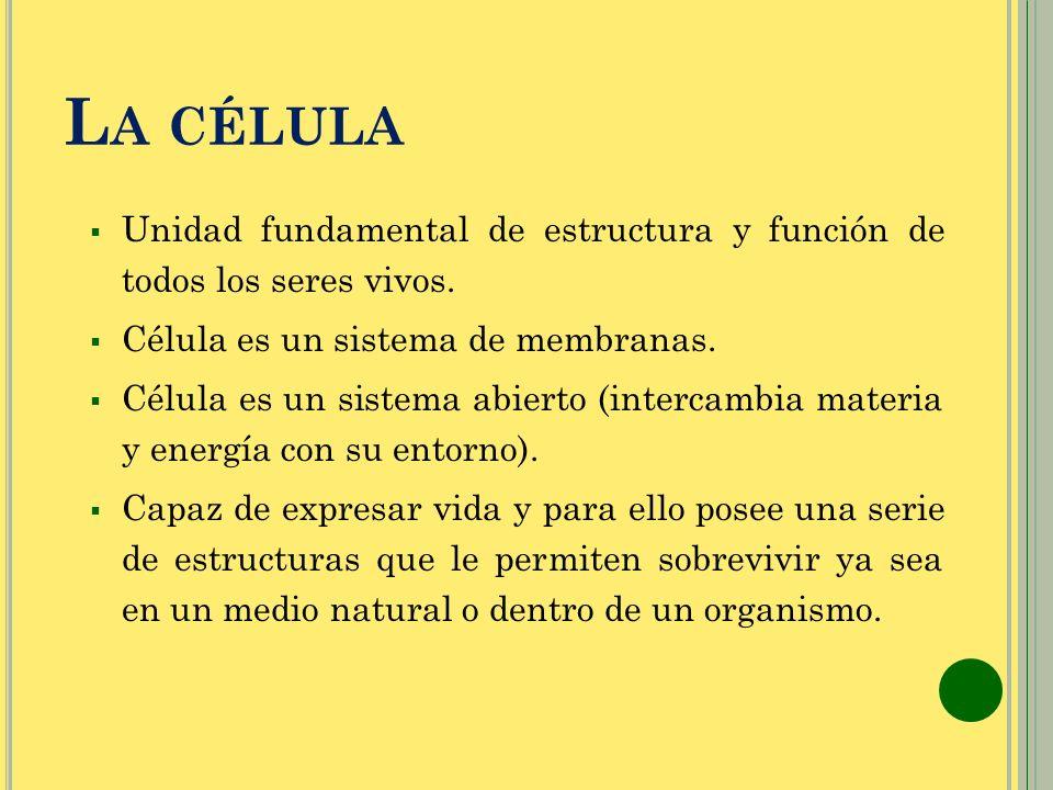 La célula Unidad fundamental de estructura y función de todos los seres vivos. Célula es un sistema de membranas.