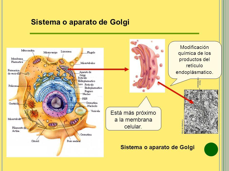 Sistema o aparato de Golgi