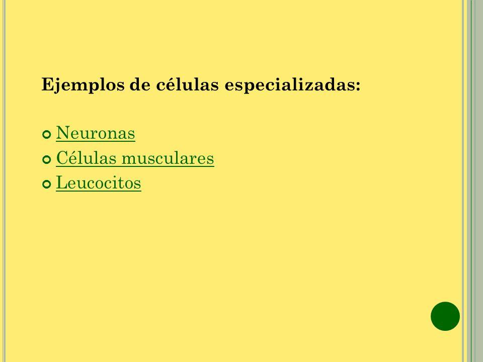 Ejemplos de células especializadas: