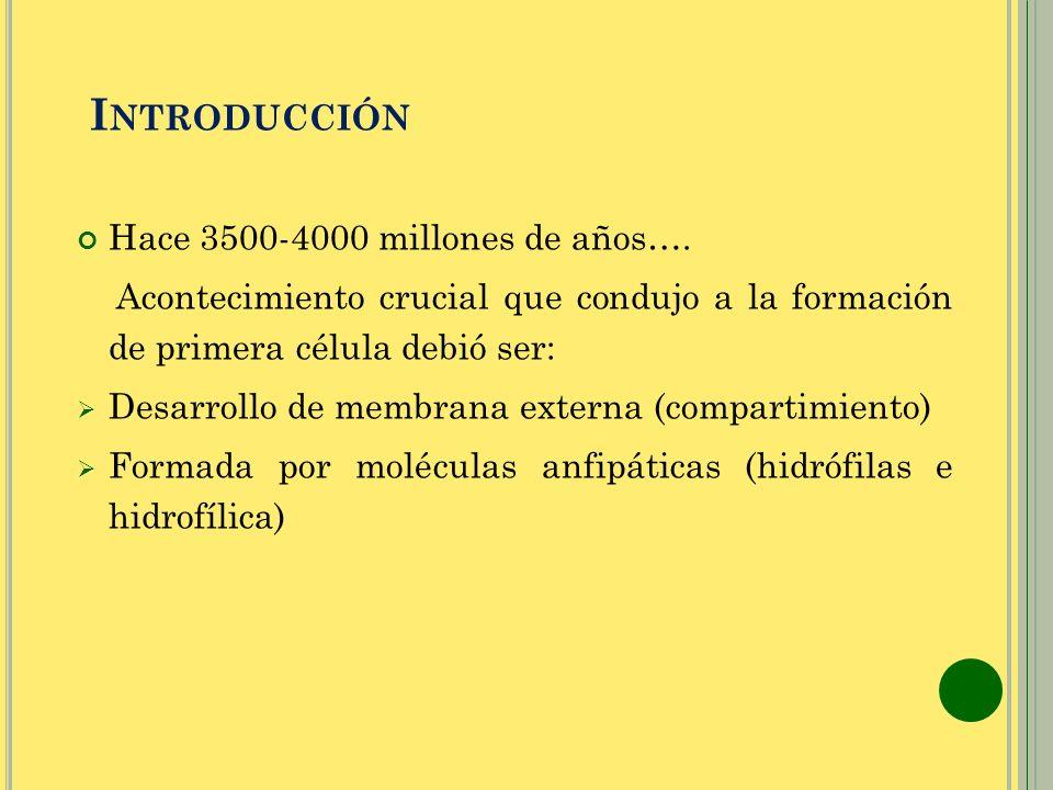 Introducción Hace 3500-4000 millones de años….