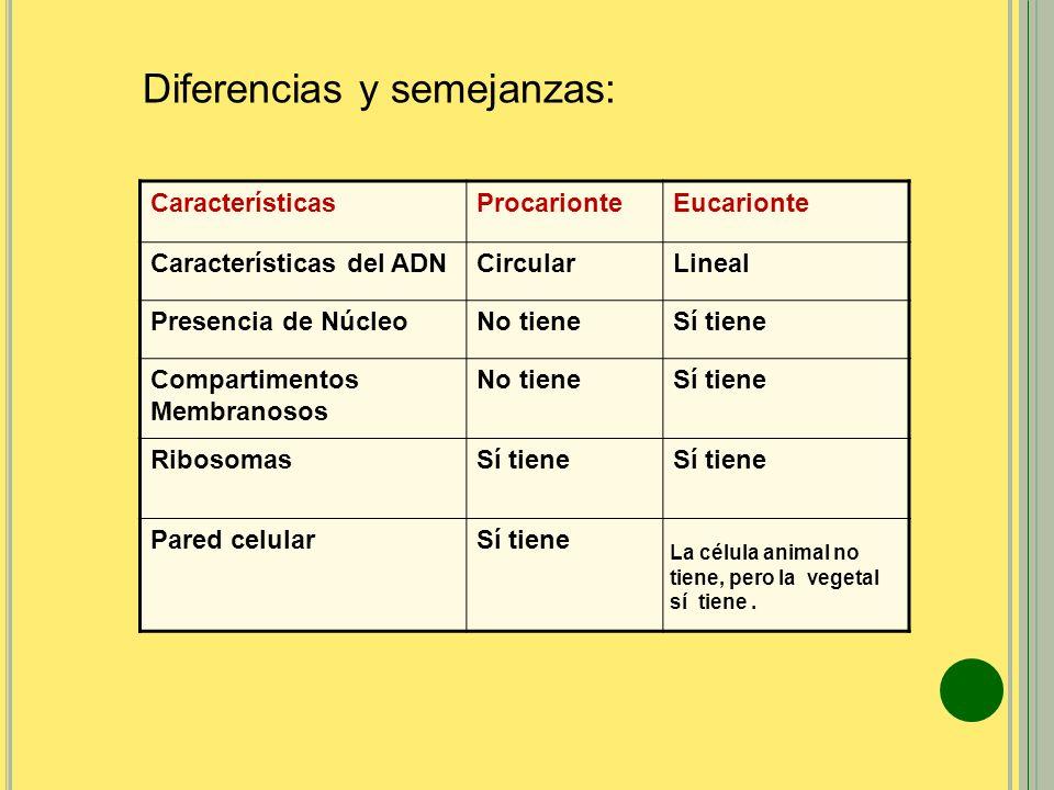 Diferencias y semejanzas: