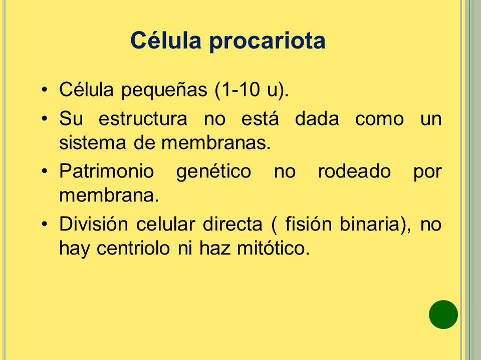 Célula procariota Célula pequeñas (1-10 u).