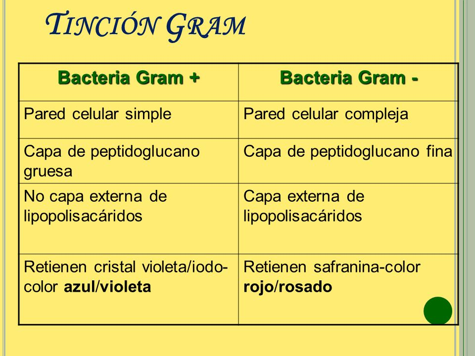 Tinción Gram Bacteria Gram + Bacteria Gram - Pared celular simple