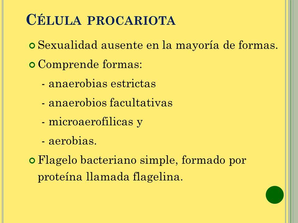 Célula procariota Sexualidad ausente en la mayoría de formas.